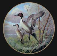 """Perfect Pintails"" by Rod Lawrence"